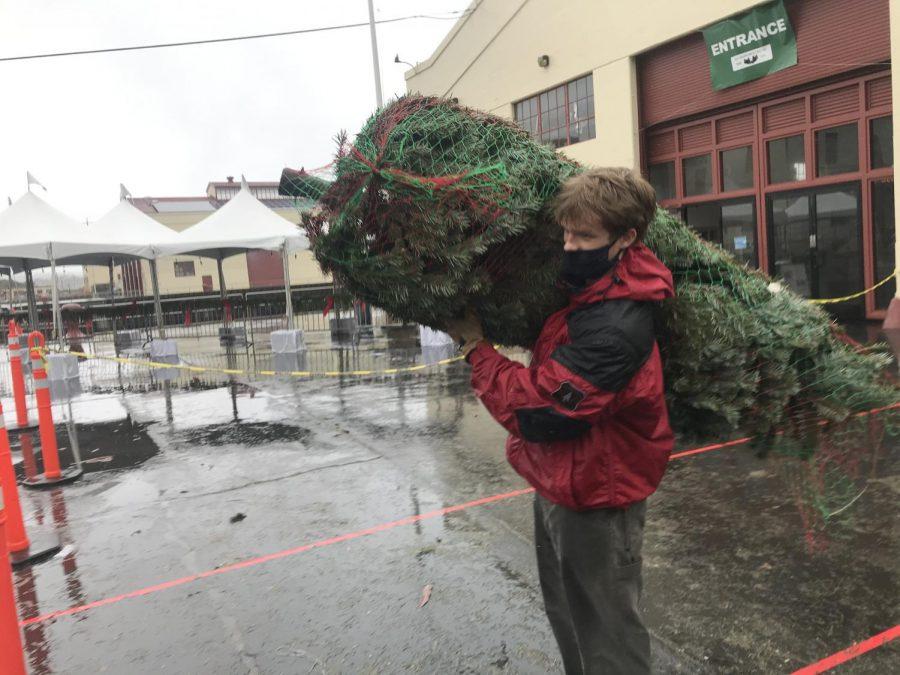 Junior Bo Darwin carries a Christmas tree to a customer